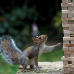 «Пиксель Тулс» анонсирует запуск модуля ведения SEO-проектов (CRM)