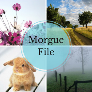morguefile-cover-662x662.jpg