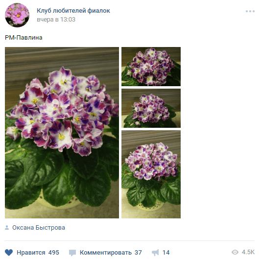 Как распознать накрутку активности ВКонтакте