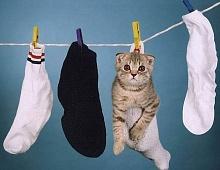 Вязаные носки превращаются… в успешный в бизнес