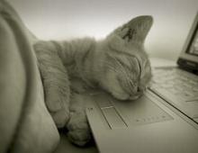 Кошки командуют в интернете